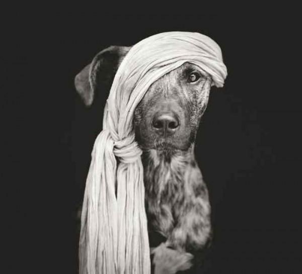 retratos-de-perros-08