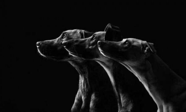 retratos-de-perros-09