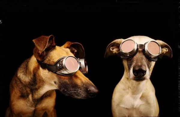 retratos-de-perros-14