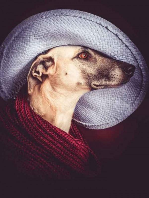 retratos-de-perros-16