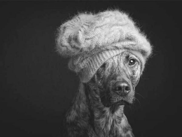retratos-de-perros-17
