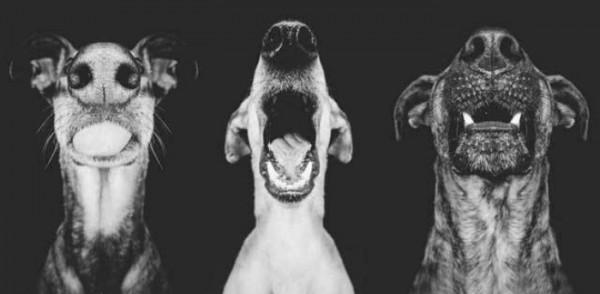 retratos-de-perros-18