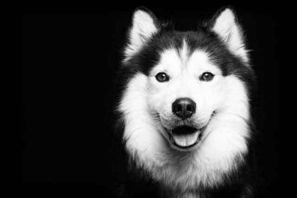 retratos-de-perros-21
