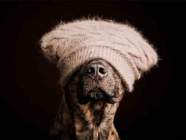 retratos-de-perros-22