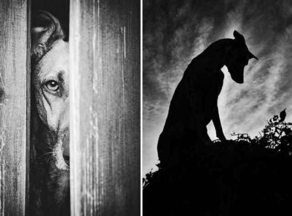 retratos-de-perros-28
