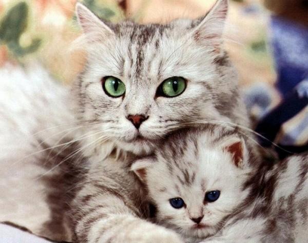 animales-abrazados-04