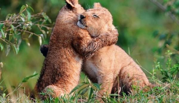animales-abrazados-09