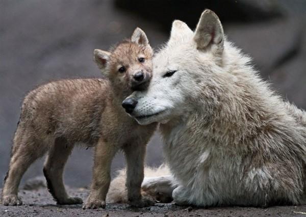 animales-abrazados-10