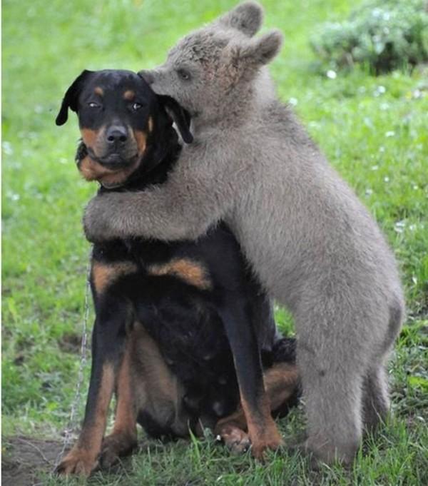 animales-abrazados-14