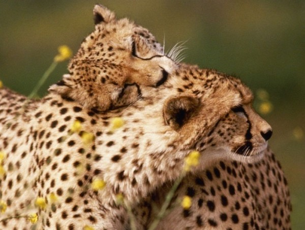 animales-abrazados-17