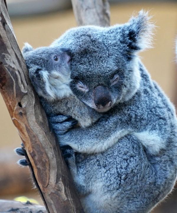 animales-abrazados-18