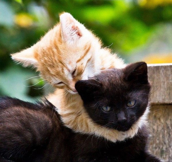animales-abrazados-24