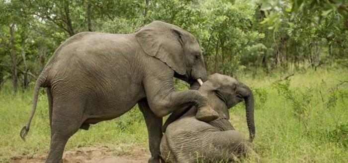 elefantes-borrachos-00