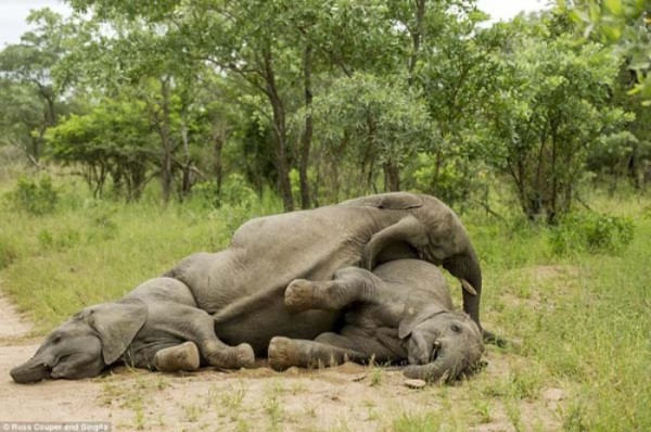 elefantes-borrachos-01