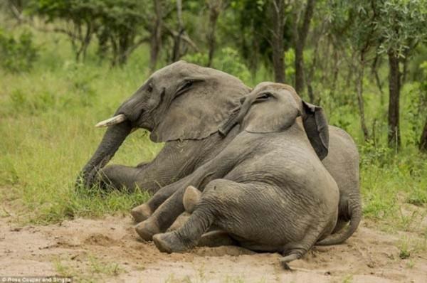 elefantes-borrachos-02