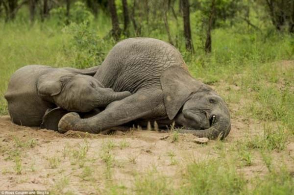 elefantes-borrachos-03