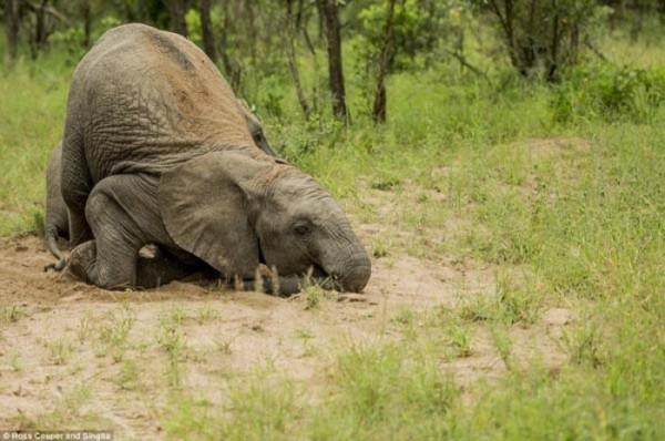 elefantes-borrachos-04