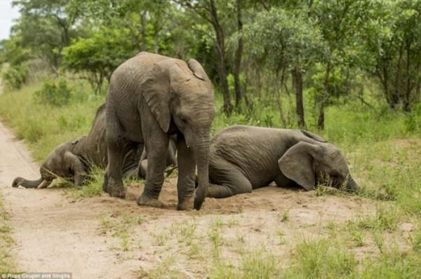 elefantes-borrachos-05