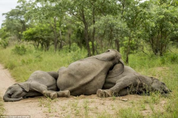 elefantes-borrachos-07