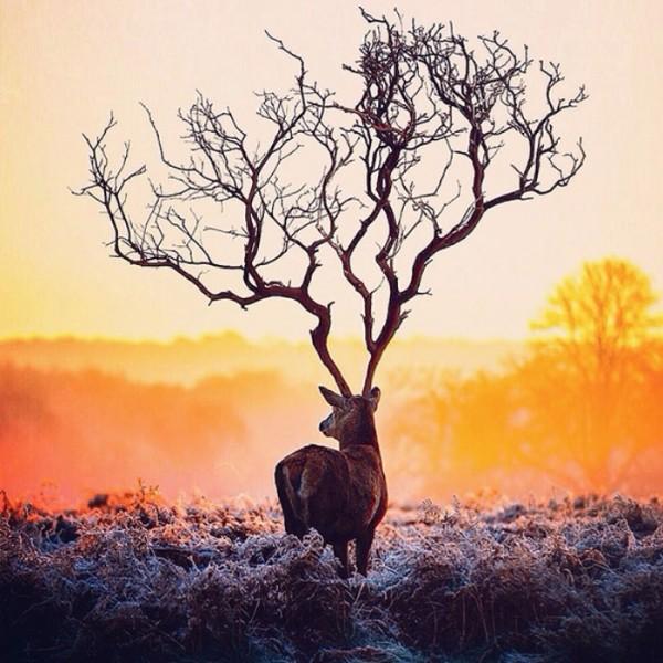 fotografia-surrealista-robert-jahns-00