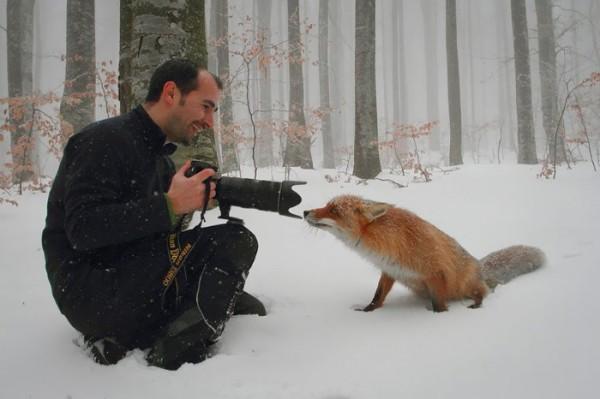 fotografias-de-zorros-fascinantes-16
