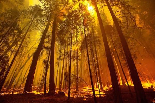 California wild fire near Yosemite