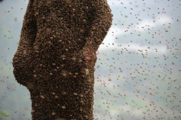 hombre-cubierto-abejas-07
