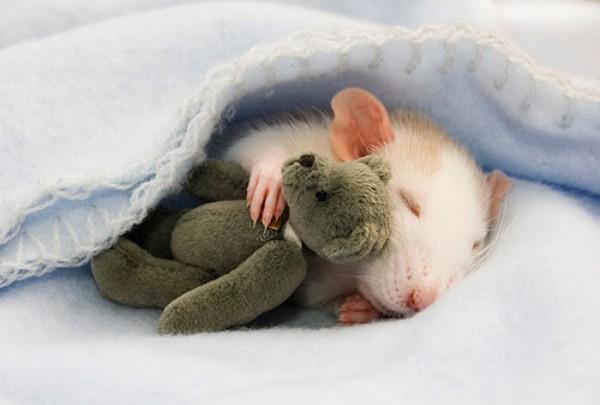 mascotas-durmiendo-con-peluches-00