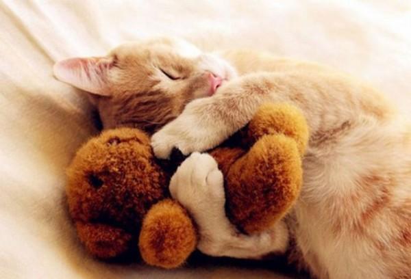mascotas-durmiendo-con-peluches-01