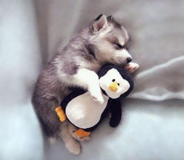 mascotas-durmiendo-con-peluches-02