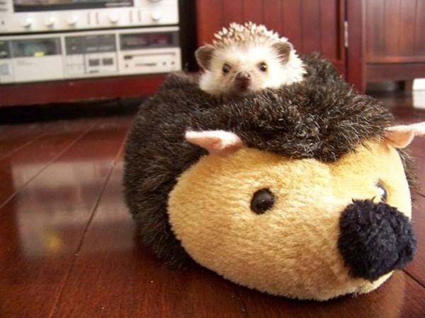 mascotas-durmiendo-con-peluches-03