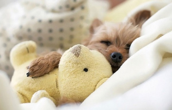 mascotas-durmiendo-con-peluches-04