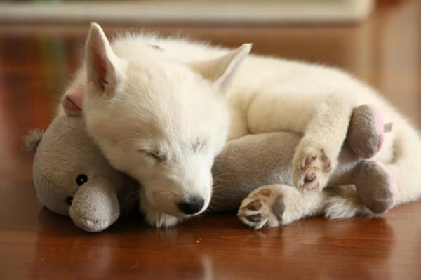 mascotas-durmiendo-con-peluches-07