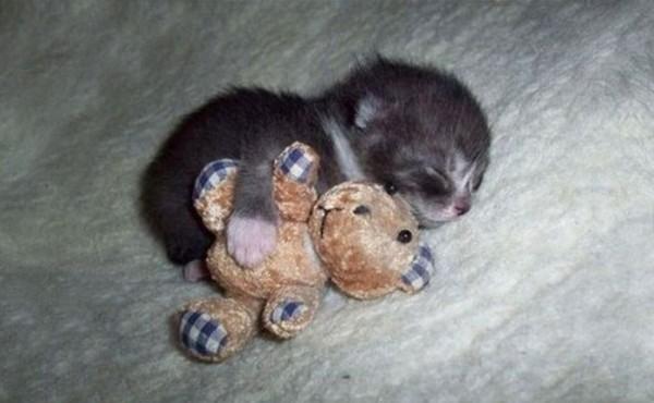 mascotas-durmiendo-con-peluches-08