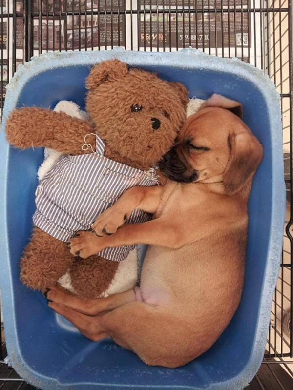 mascotas-durmiendo-con-peluches-09