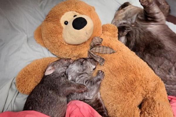 mascotas-durmiendo-con-peluches-11