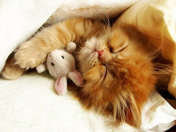 mascotas-durmiendo-con-peluches-13
