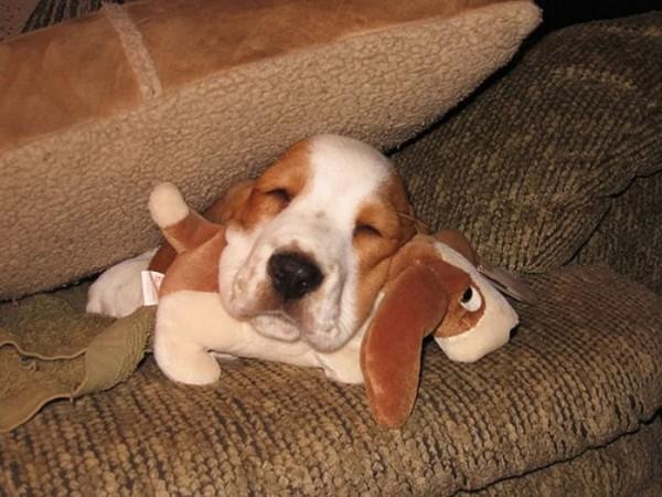 mascotas-durmiendo-con-peluches-16