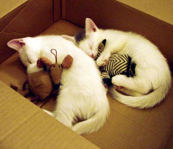 mascotas-durmiendo-con-peluches-17