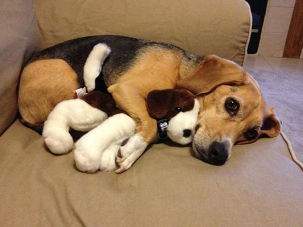 mascotas-durmiendo-con-peluches-18