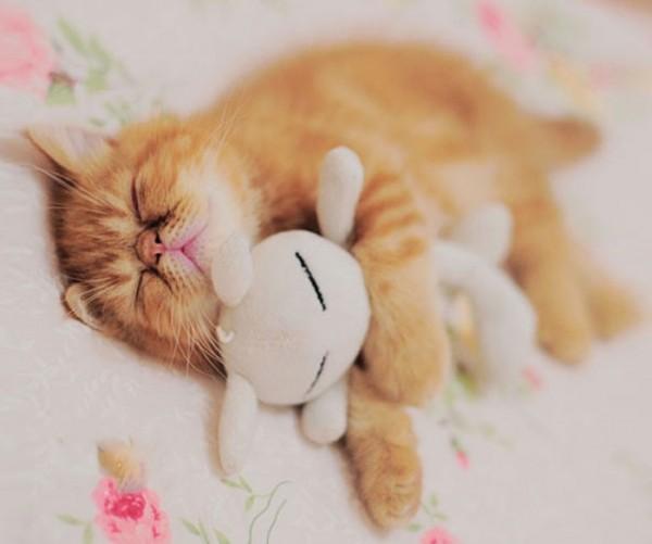 mascotas-durmiendo-con-peluches-19