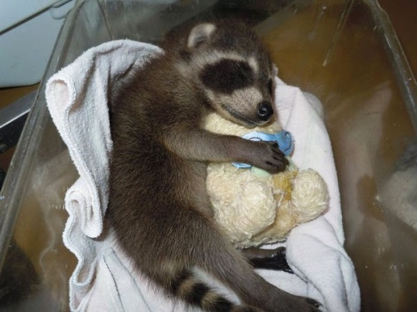 mascotas-durmiendo-con-peluches-21