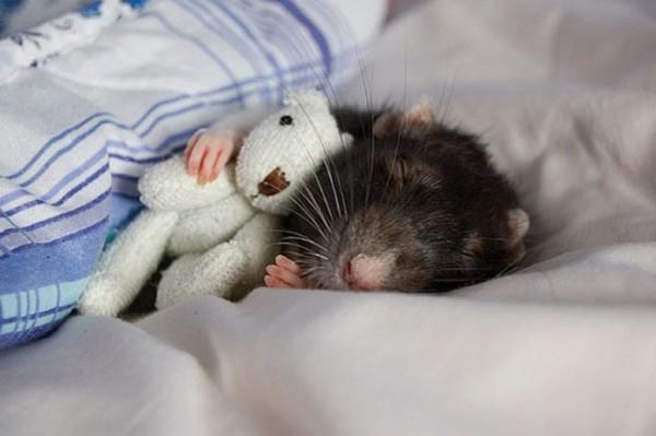 mascotas-durmiendo-con-peluches-23