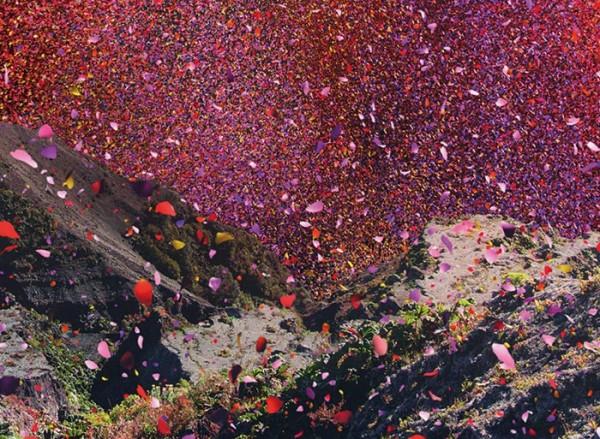 nickmeek-petalos-flores-03