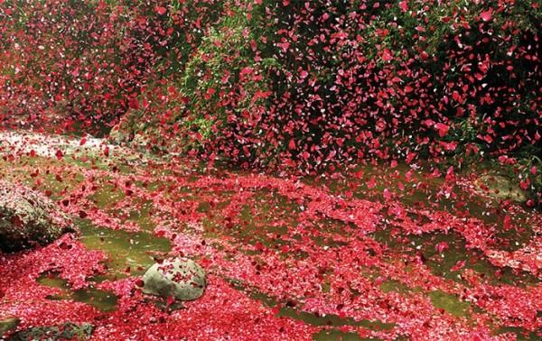 nickmeek-petalos-flores-06