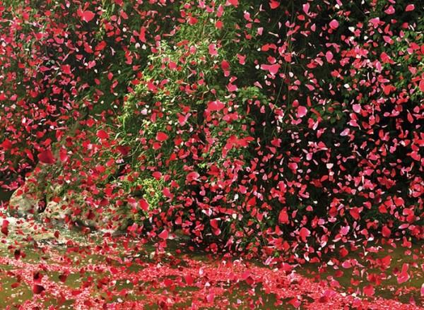 nickmeek-petalos-flores-07