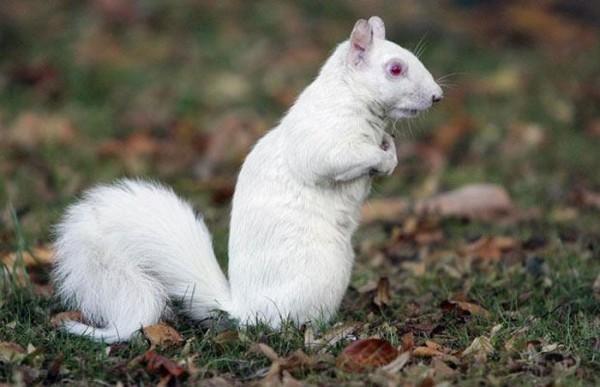 animales-albinos-04