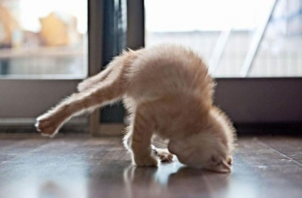 animales-divertidos-haciendo-yoga-01