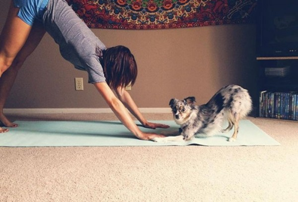 animales-divertidos-haciendo-yoga-17