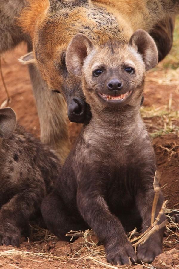 animales-sonriendo-08